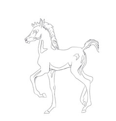 horse lines vector image