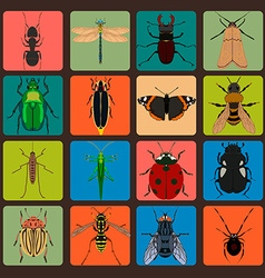 Insect sign set with bug grasshopper spider fly vector image