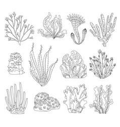 marine algae ocean seaweed and corals silhouettes vector image