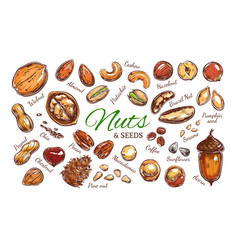Nuts and seeds colorful collection vector