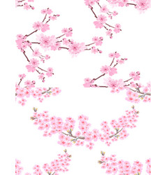 Sakura two pictures with delicate lush flowers vector