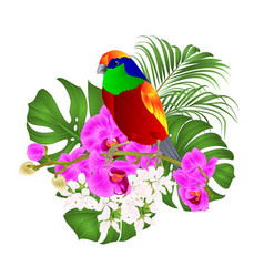 tropical bird standing on a purple orchid vector image