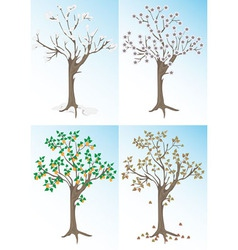Apricot tree and the seasons vector
