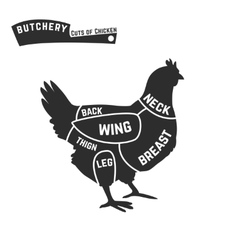 cuts chicken butcher diagram vector image