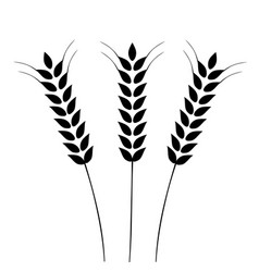 Ears wheat vector