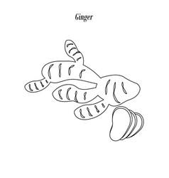 ginger outline vector image
