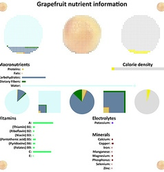Grapefruit nutrient information vector
