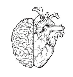 Hand drawn line art human brain and heart halfs vector
