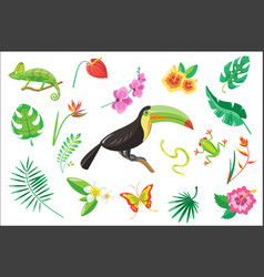 Set of tropical summer elements flowers toucan vector