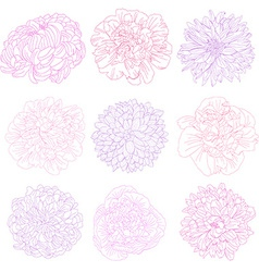 decorative flowers set vector image