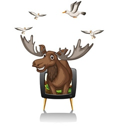 Moose and birds on television screen vector image