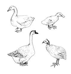 hoome birds sketch vector image