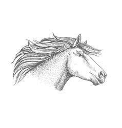 Horse head sketch sport emblem vector image