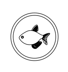 Monochrome line contour with fish in circular vector