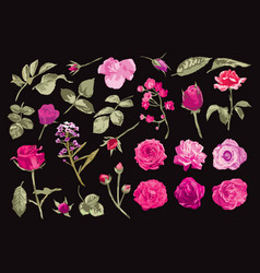 roses and leaves set vector image