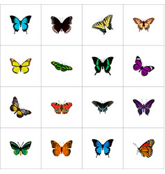 Set of butterfly realistic symbols with hypolimnas vector