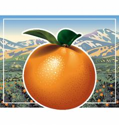 orange grove vector image vector image