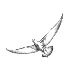 Hand drawn sketch seagull in black color vector