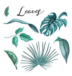 tropical exotic leaves summer set vector image