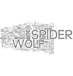 wolf spider text word cloud concept vector image