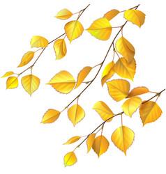 Yellow birch leaves vector