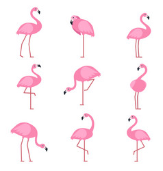 Cartoon pictures exotic pink bird flamingo vector