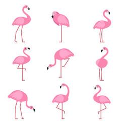Cartoon pictures of exotic pink bird flamingo vector