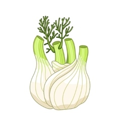 Fennel colored botanical vector