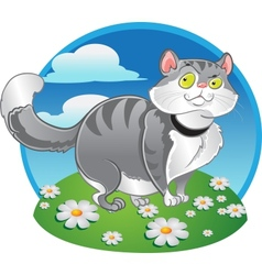 Grey fat cat on the color background vector image