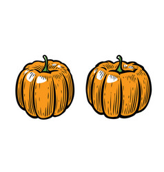 halloween pumpkin cartoon vector image