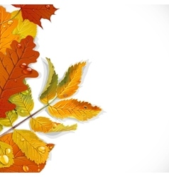Realistic red yellow and green autumn leaves vector