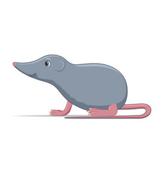 Shrew standing on a white background vector