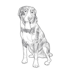swiss mountain dog hand drawn sketch vector image