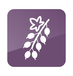 Currant outline icon Fruit vector