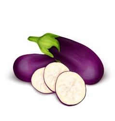 Eggplant aubergine isolated vector