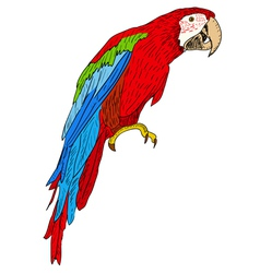 Macaws vector