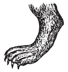 Otter foot vintage vector