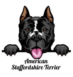 American staffordshire terrier - color peeking vector