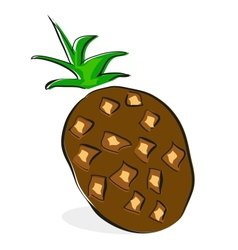 Coconut clip-art on White background vector