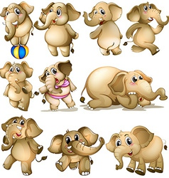 Elephant set vector image