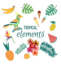 floral summer tropical elements parrot leaves and vector image