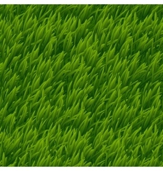 Green grass seamless texture vector