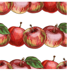 hand drawn close-up red apple pattern vector image