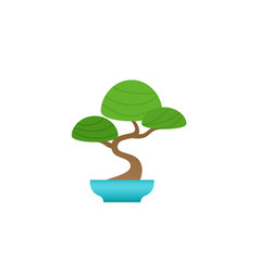 Indoor bonsai tree potted plant vector