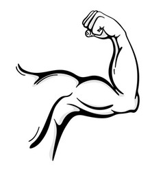 Muscle arm line art vector