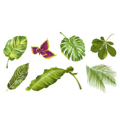 Tropical plants set vector