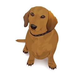 Dachshund realistic of a dog vector image vector image