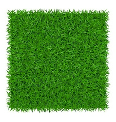 Green grass background 1 vector image