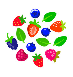 different berries and leaves on white background vector image