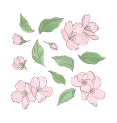 Sakura floral flower decoration clip art il vector